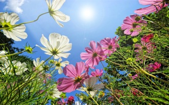 foto-zomer-wallpapers-hd-zomer-achtergronden-02-bloemen-zon